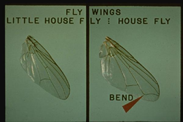Little House Fly