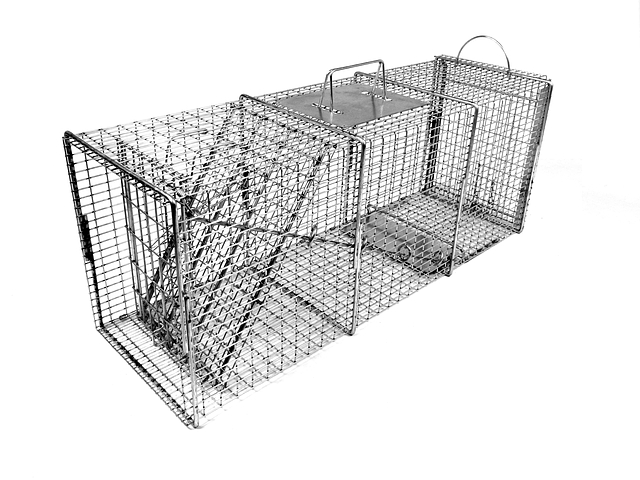 608SS - 10x12 Pro Raccoon Trap with One Trap Door and Rear Access Door