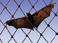 Bat Netting