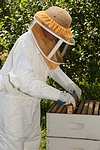 Bee Suit & Veil - Size XL